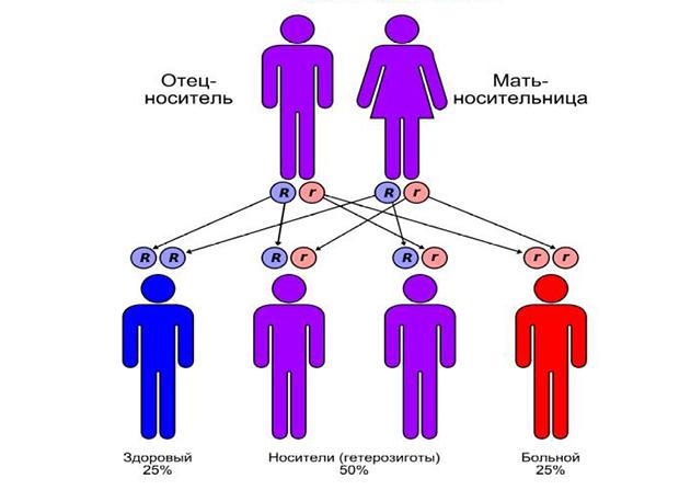 Генетические факторы