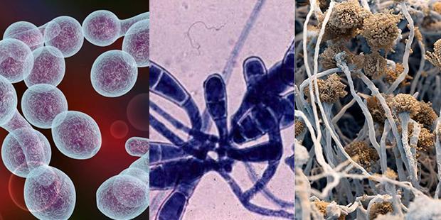 Виды грибков