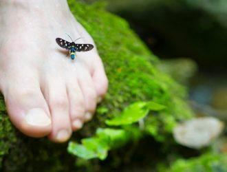 Где можно заразится грибком и основные причины его появления на ногах?