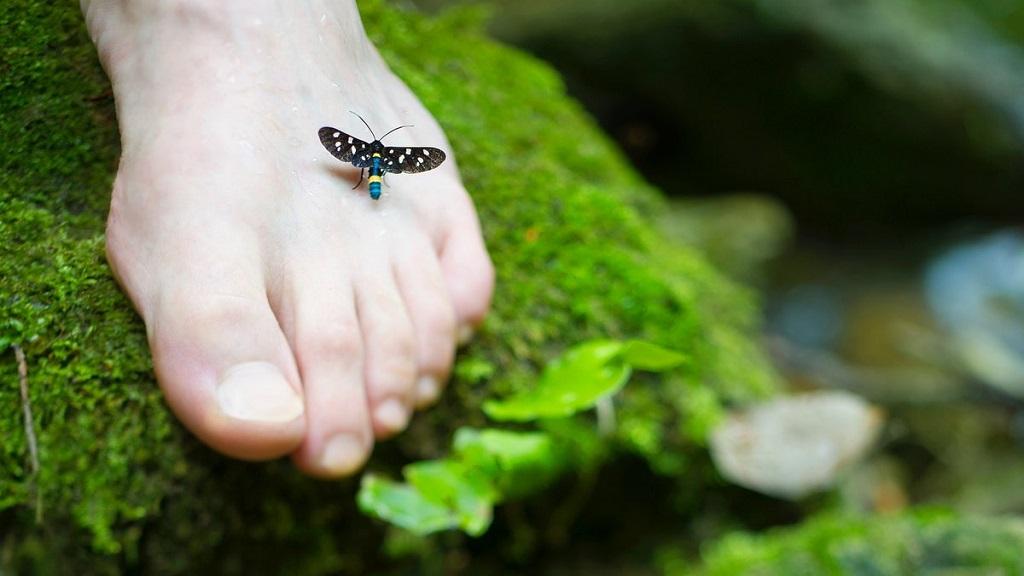 prichiny poyavleniya gribka na nogah