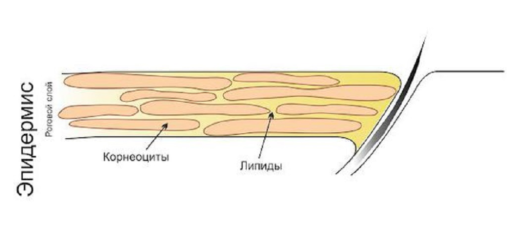 Eritrazma lechenie